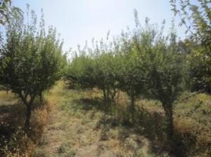 باغچه دنج شهریار - فروش و معاوضه فوری