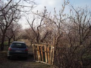 فروش یک قطعه باغ 6800متری در فردوسیه شهریار