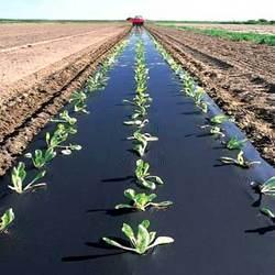انواع نايلون گلخانه ای و کشاورزی( مالچ مشكي و دو رنگ )در عرض