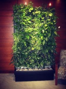 دیوار سبز تکبام صبح امروز